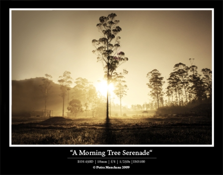 A Morning Tree Serenade